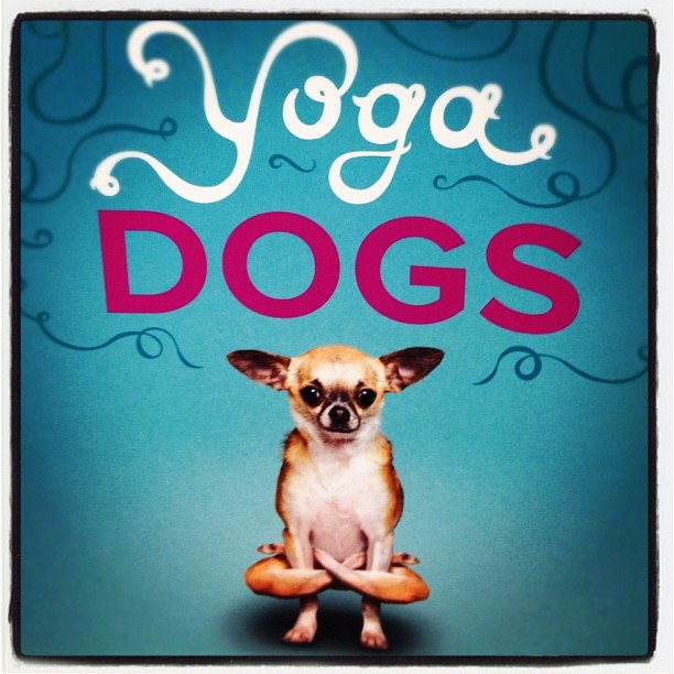 Perfect book for #yoga and #dog lovers #soulscapelife #downwarddog #encinitas