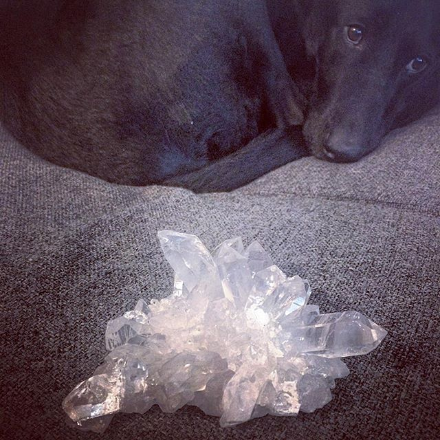 I guess it's time to bring in these #quartz clusters that I unpacked in February... they made my garage work table unusable, but pretty. My dog is sad about it too.