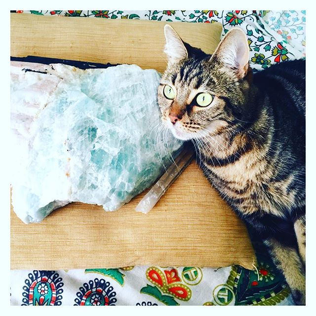 We're getting ready for our morning #meditation with our new #aquamarine friend from #tuscon2016 . I think this little cat has decided the #crystal belongs to her, not me! #catsandcrystals
