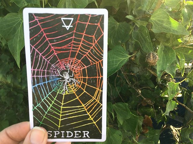 We're feeling those spidey vibes today! @the_wild_unknown #animalspiritdeck 🕷🕷🕷🕷🕷🕷 don't forget to come say hi to @kim_krans this coming Monday 10/15/18 from 7:30-8pm during her stop at #Soulscape on #thewildunknowntour !!
